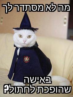 תמונת החתול: sigalonoddities.soup המם: קהילת המעריצים